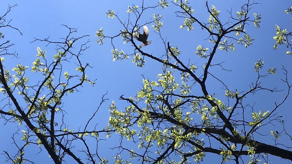 A photograph of a tree with a bird flying