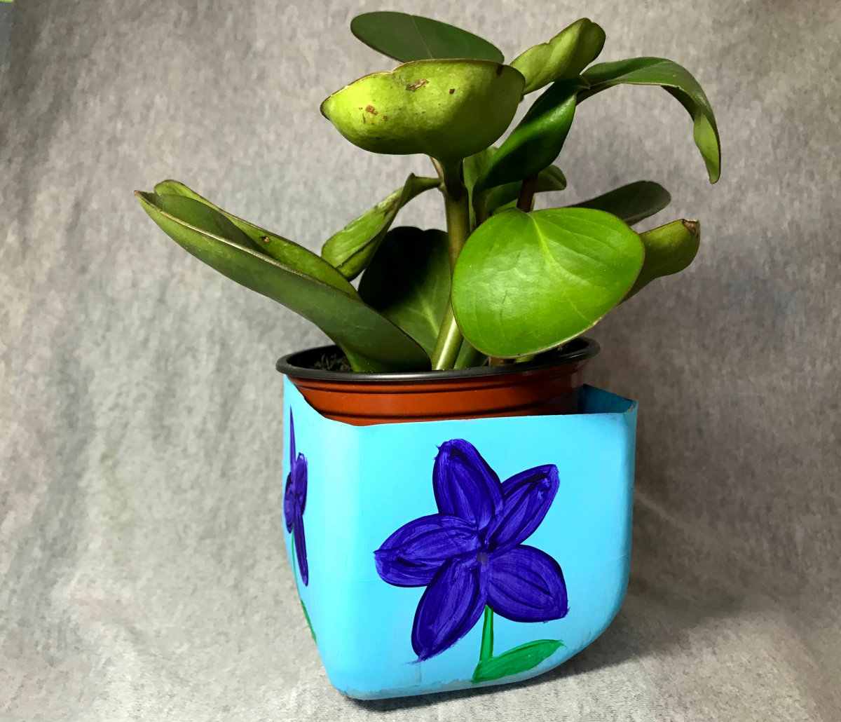 Blue upcycled planter with a plant