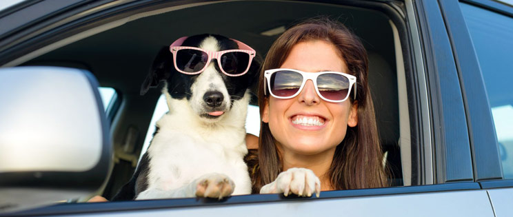 pets and car insurance
