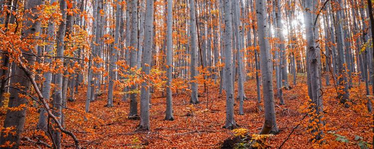 Autumn Foliage in New England
