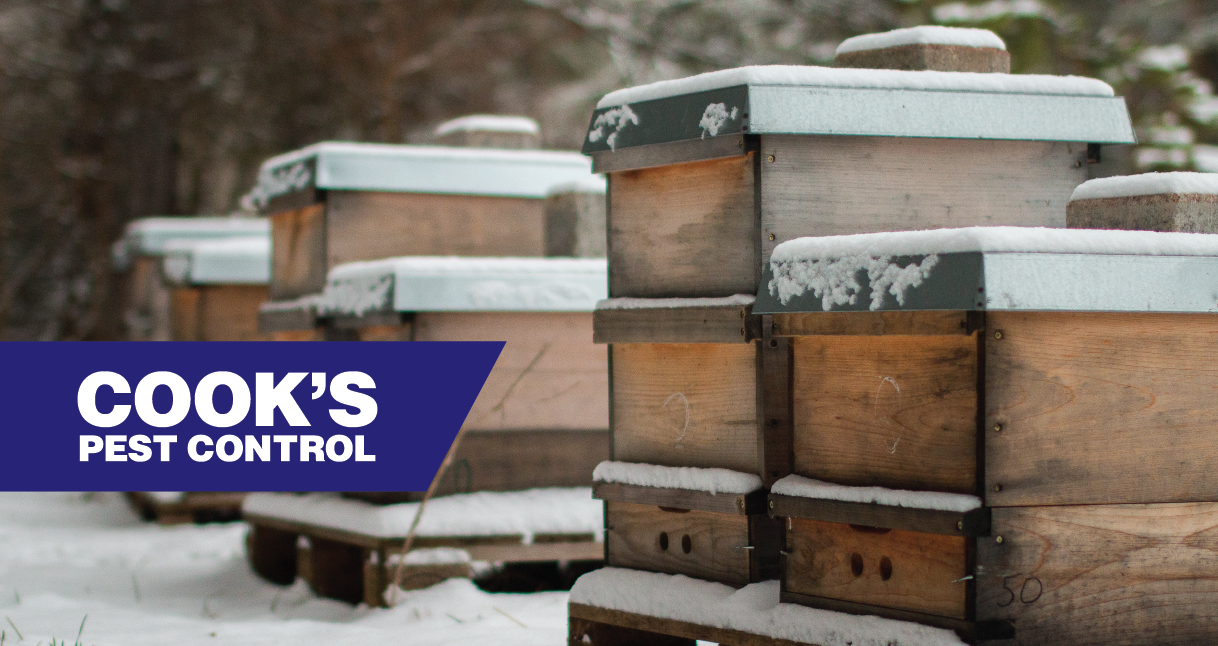 Bee Hive Boxes in Snow with Cook's Pest Control logo