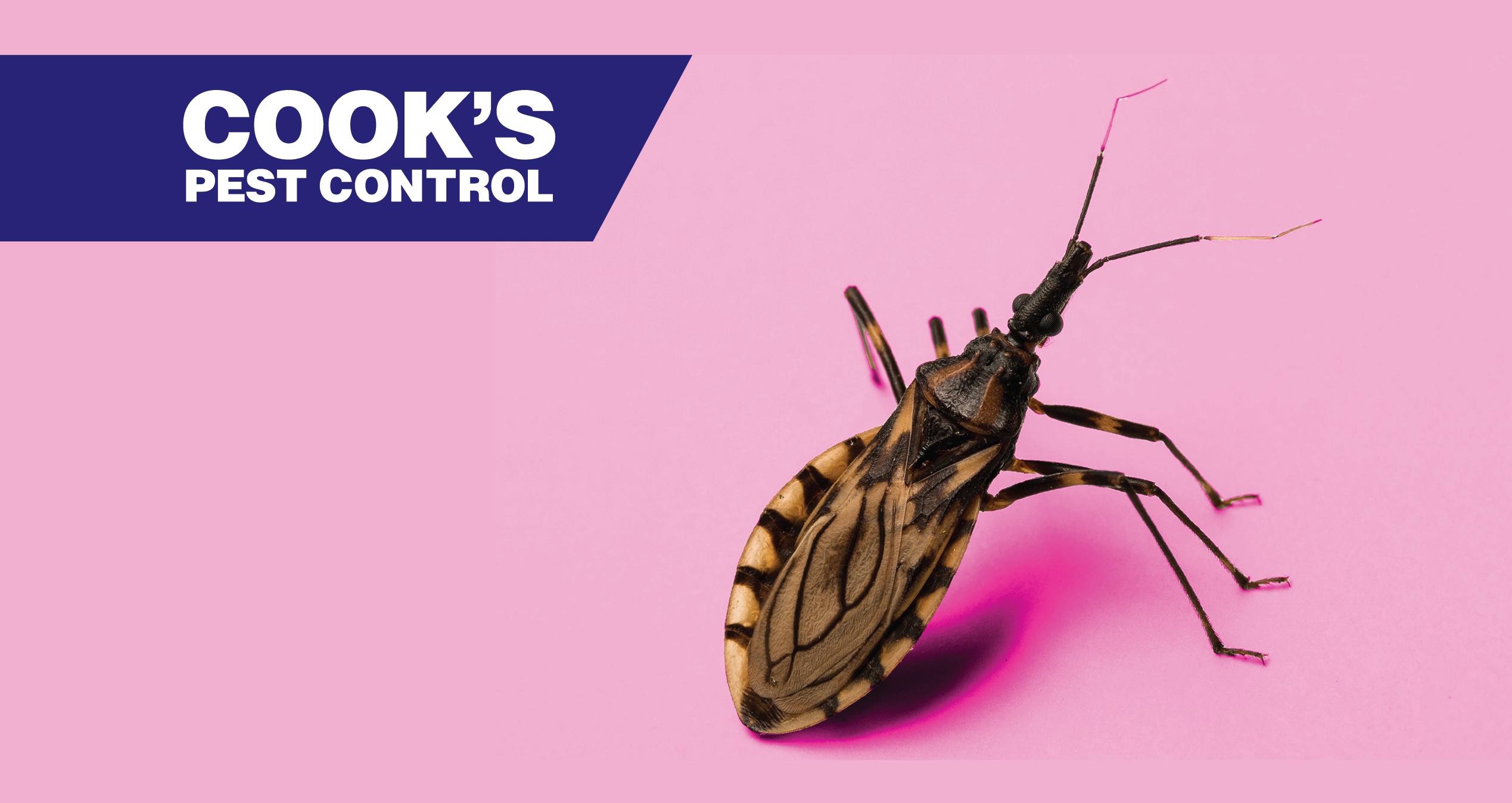 Learn about the Kissing Bug