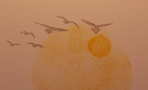 Waterfront_birds
