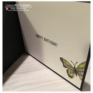 Butterfly_gala_056