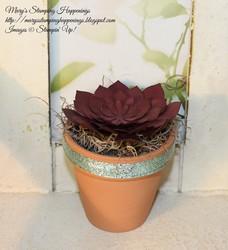 Small 1 succulent pot 1a