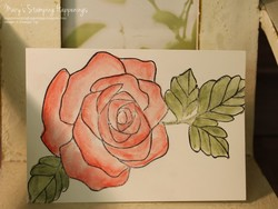 Watercolor_rose_wonder_1a