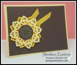 Sunflower_eastern_beauty