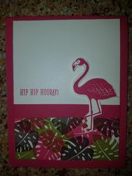 Pop_of_paradise_flamingo