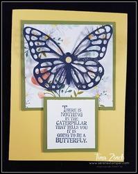 Butterfly_basics_tina_zinck