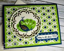 Stampin_up_beautiful_peacock_carolpaynestamps1