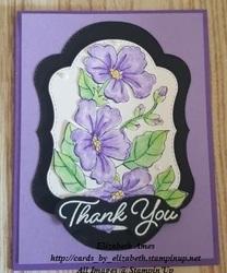 Thank you purplewmflipl
