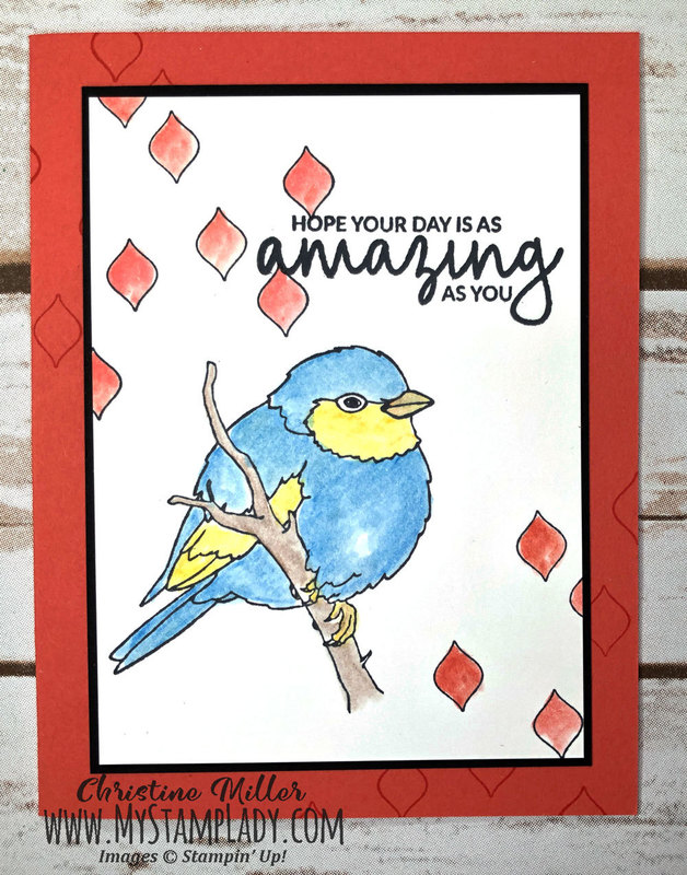 Amazing_bird_front