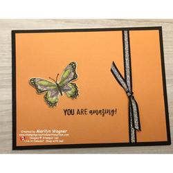 Butterfly_gala_055
