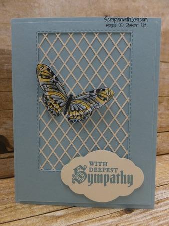 Balmy_blue_butterfly
