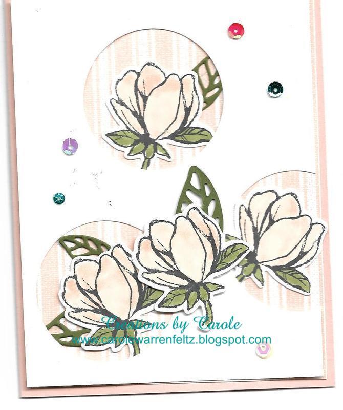 Good_morning_magnolia_6