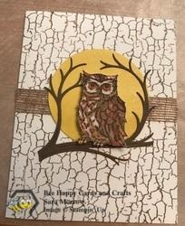 Owl background se t 2019