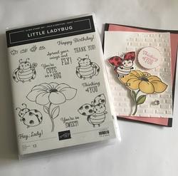 Little_ladybug