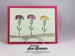 Carnations iris