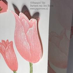 tijdloze tulpen