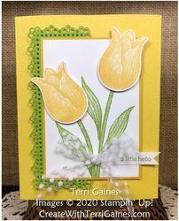 Timeless tulip   1