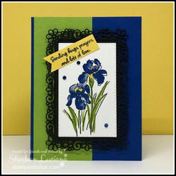 Sprin iris front  1