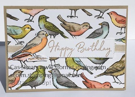 Bird ballad male