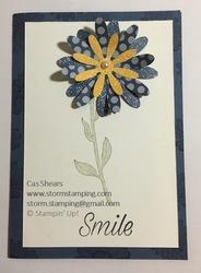 Daisy in colour card