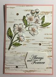 Forever birch