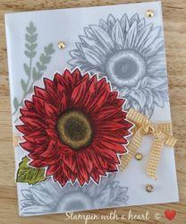 Celebrate sunflowers wowzer
