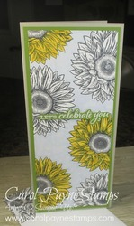 Stampin up celebrate sunflowers slim carolpaynestamps1
