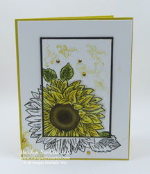 Sunflower spotlighting w