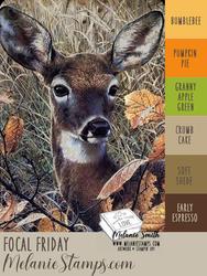 Focal friday nov 13 2020 color palette