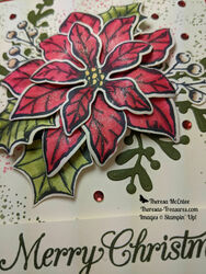 Poinsettia petals close up sparkle wm