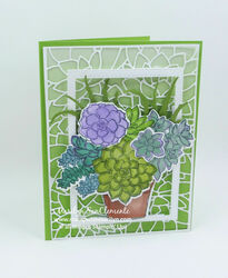 Succulent with frame 2w