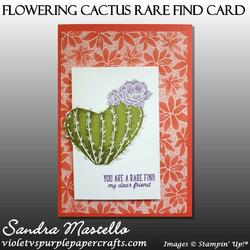Flowering cactus rare find card 02