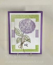 Hydrangea haven card