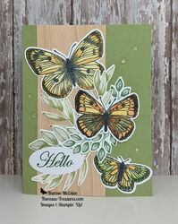 Stampin  up butterfly brilliance hello straight wm