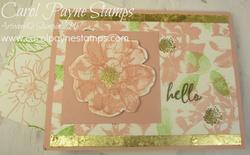 Stampin up to a wild rose carolpaynestamps2