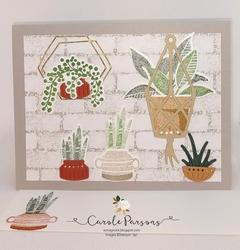 Blog plants