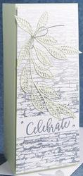 Steve   lyn card