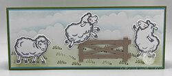Counting sheep1