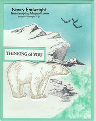 Arctic bears   thinking of you