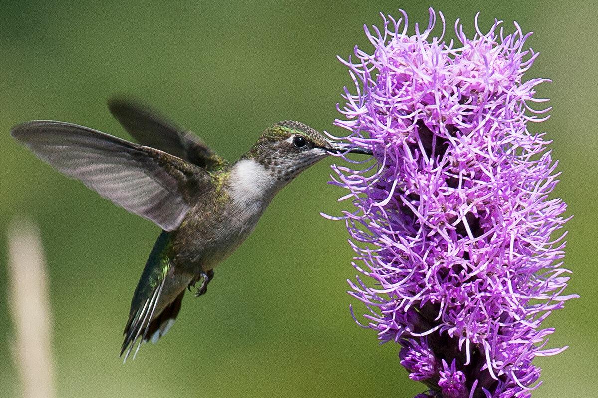 Birds, Bees, and Butterflies