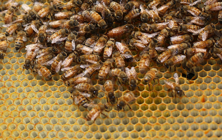Queen Bee, Beekeeping, Bees, Bee Suit, Honey Bees