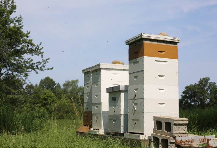 Beekeeping, Bees, Bee Suit, Honey Bees
