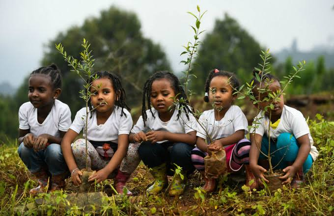 ethiopia world record trees 350 million trees