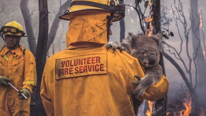 australian animals in fire