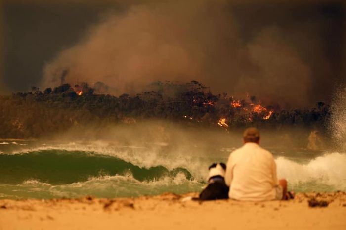 a man and a dog watching the fire