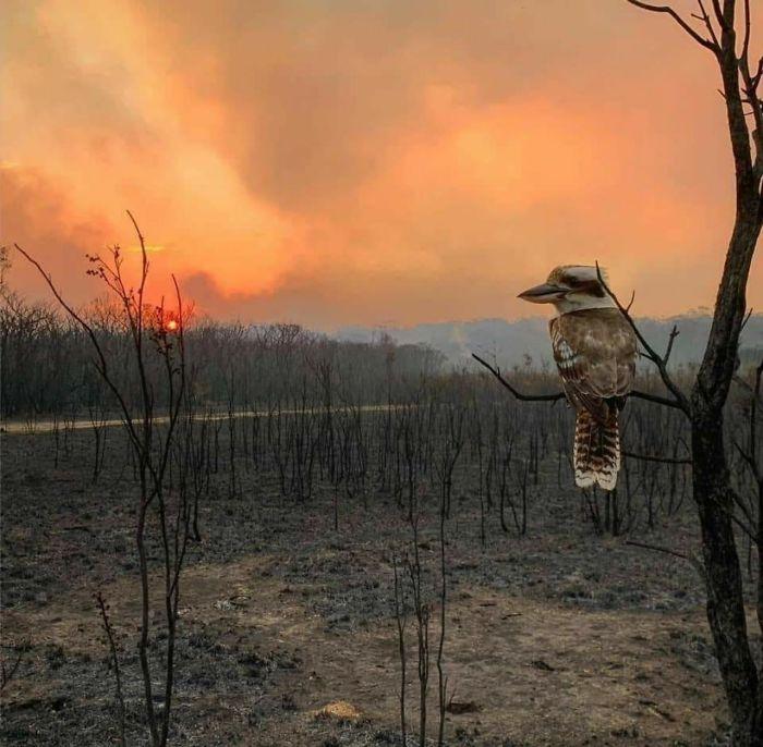birds in fire Australia