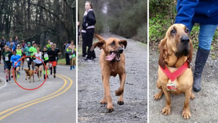 dog accidentally runs marathon
